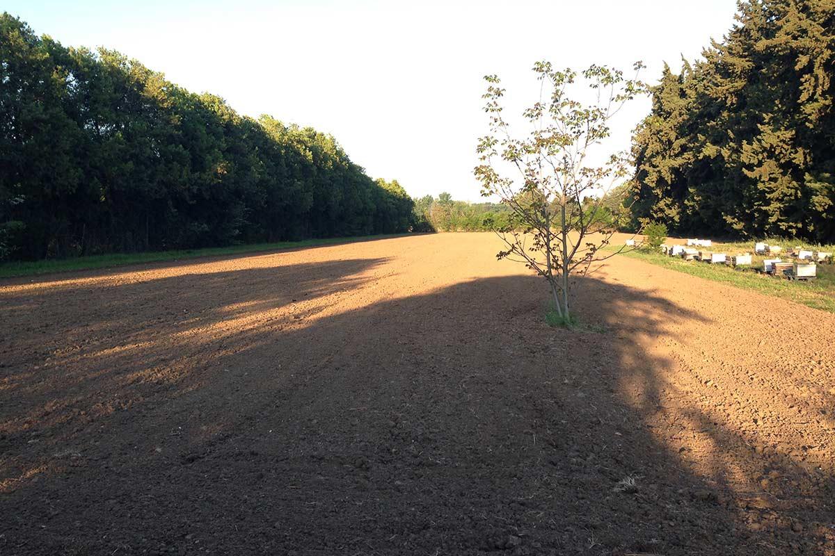 Debroussaillage-+-travail-du-sol